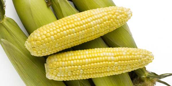 sanovnik kukuruz